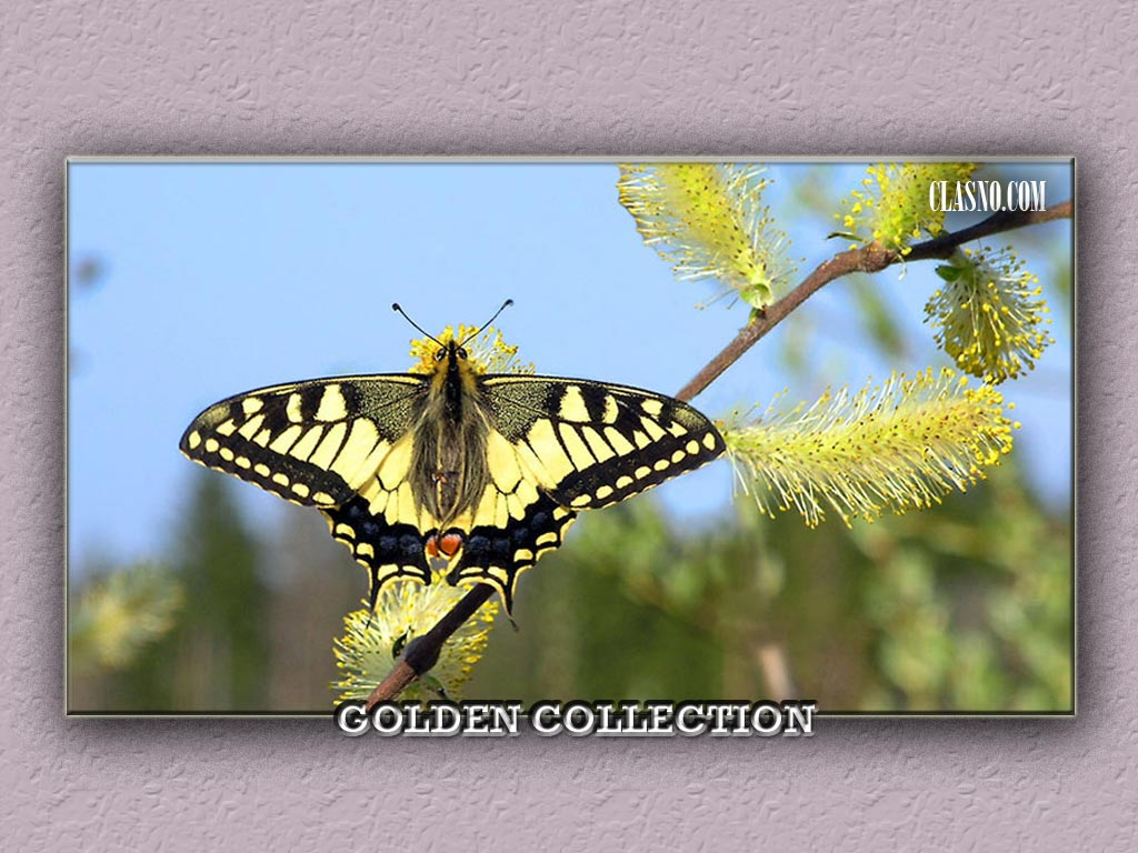 Butterfly Golden Collection - фотография
