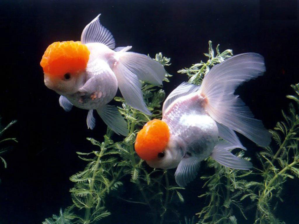http://clasno.com/gallery/aquarium/aquarium_001.jpg