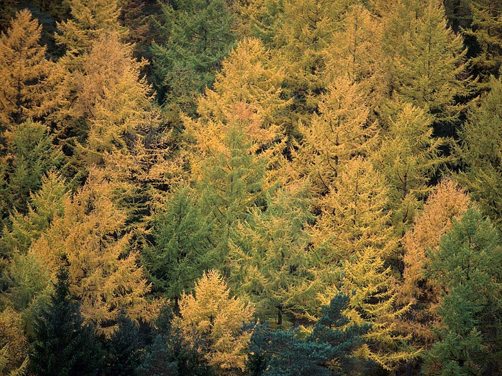 Осенний лес фотография