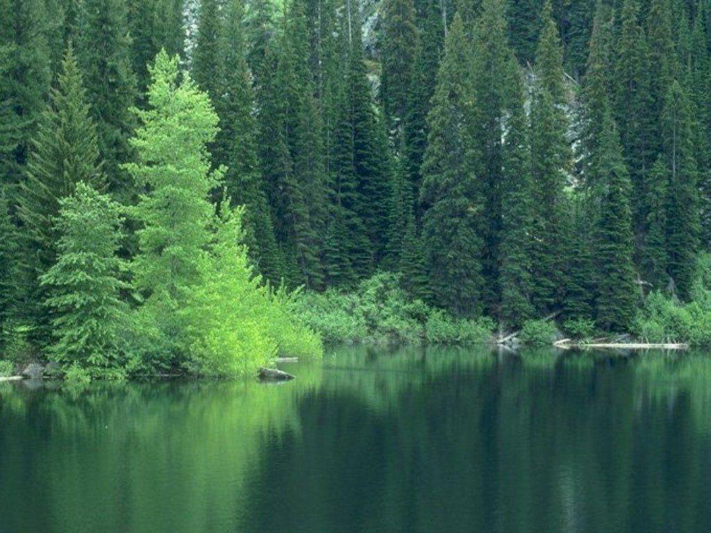 Природа другие фото категории